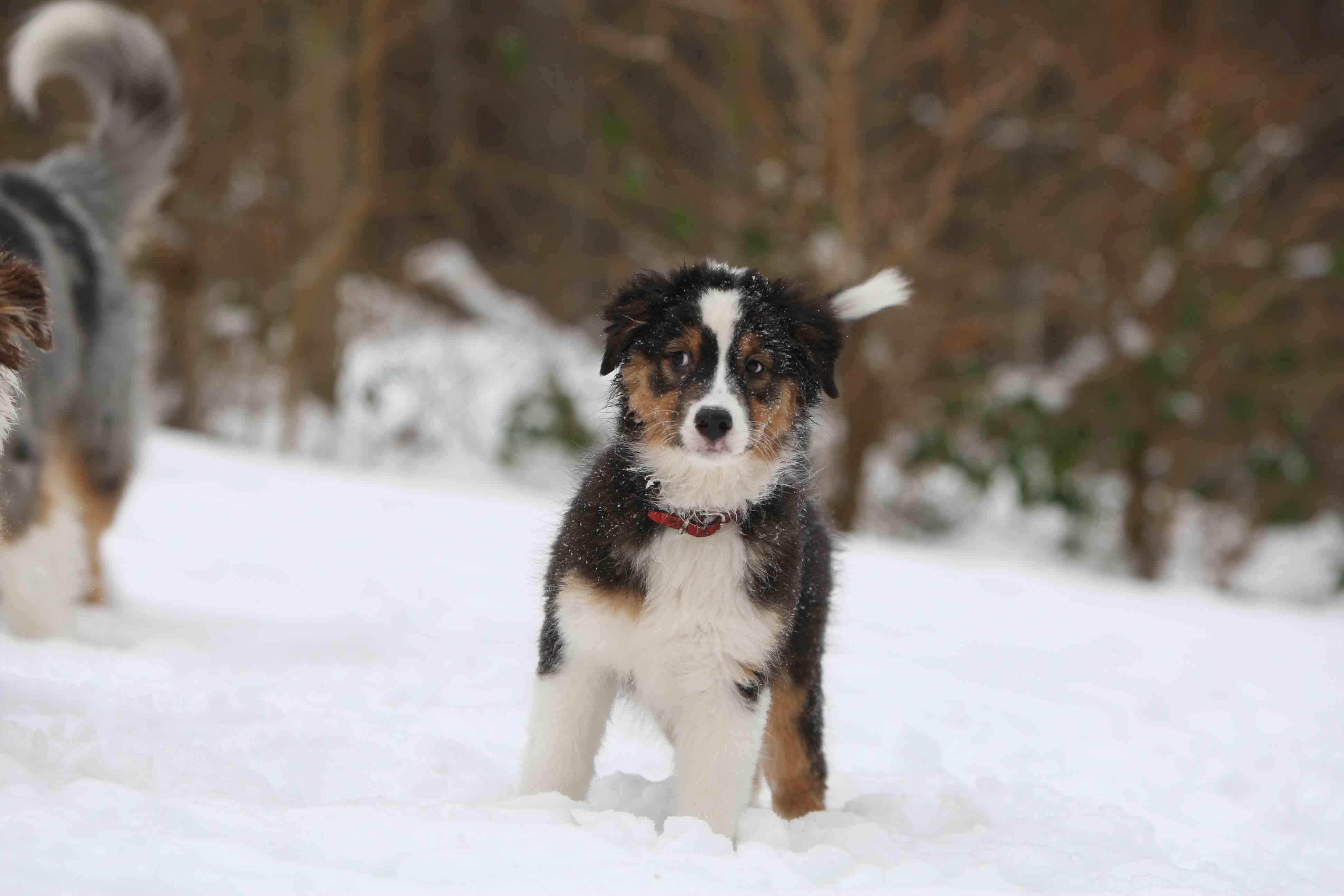 Infos rund um Weihnachten in der Hundeschule