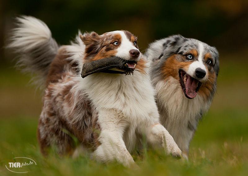 Hundespielen ab September