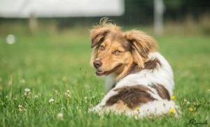 HundespielenLüSe080815-02318