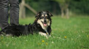 HundespielenLüSe080815-02323