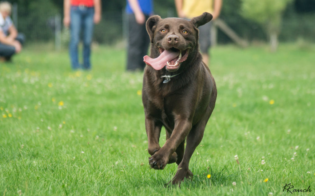 Hundespielen am Samstag, dem 27.7.2019