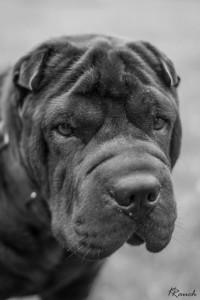 HundespielenLüSe080815-02500