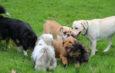 Zusätzlicher Termin fürs Hundespiel