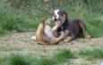Hundespielen am Montag, Änderungen ab sofort