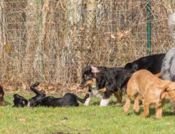 Hundespielen vom 15.8.2020 – 19.8.2020