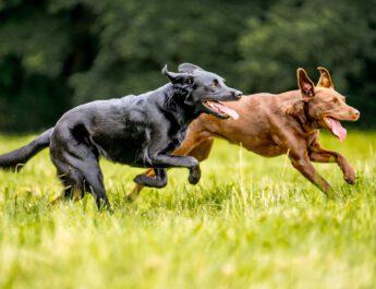 Es geht wieder mit dem Hundespielen los!